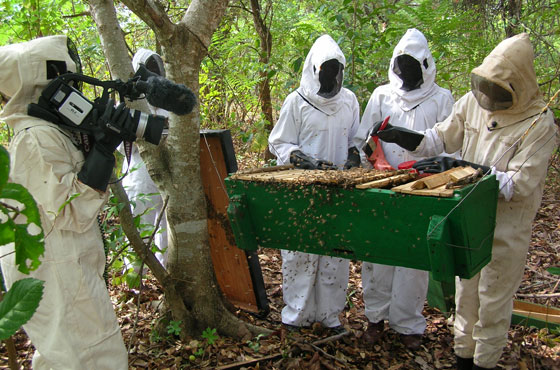 beekeeping in Malawi